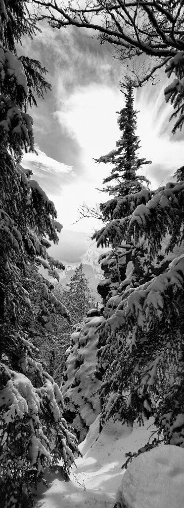 Schwarzwald vertikal