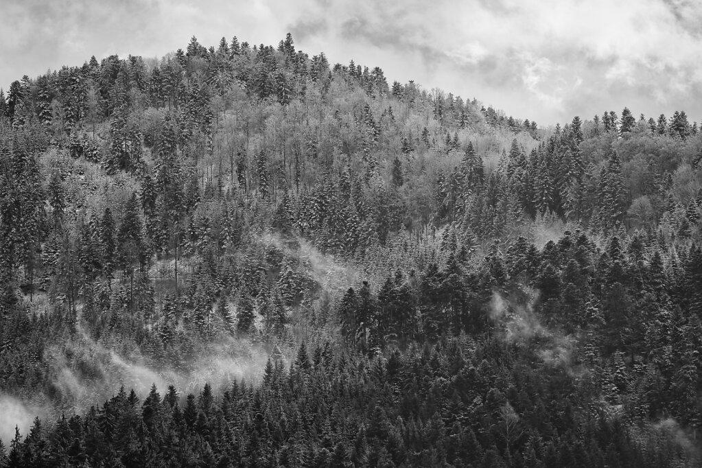 Schwarzwald 3