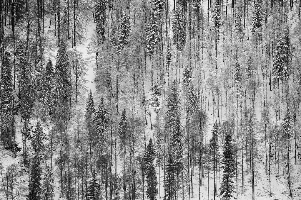 Schwarzwald 4