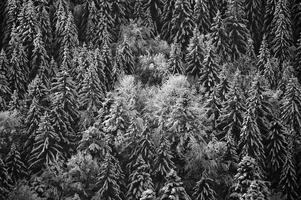 Schwarzwald 7