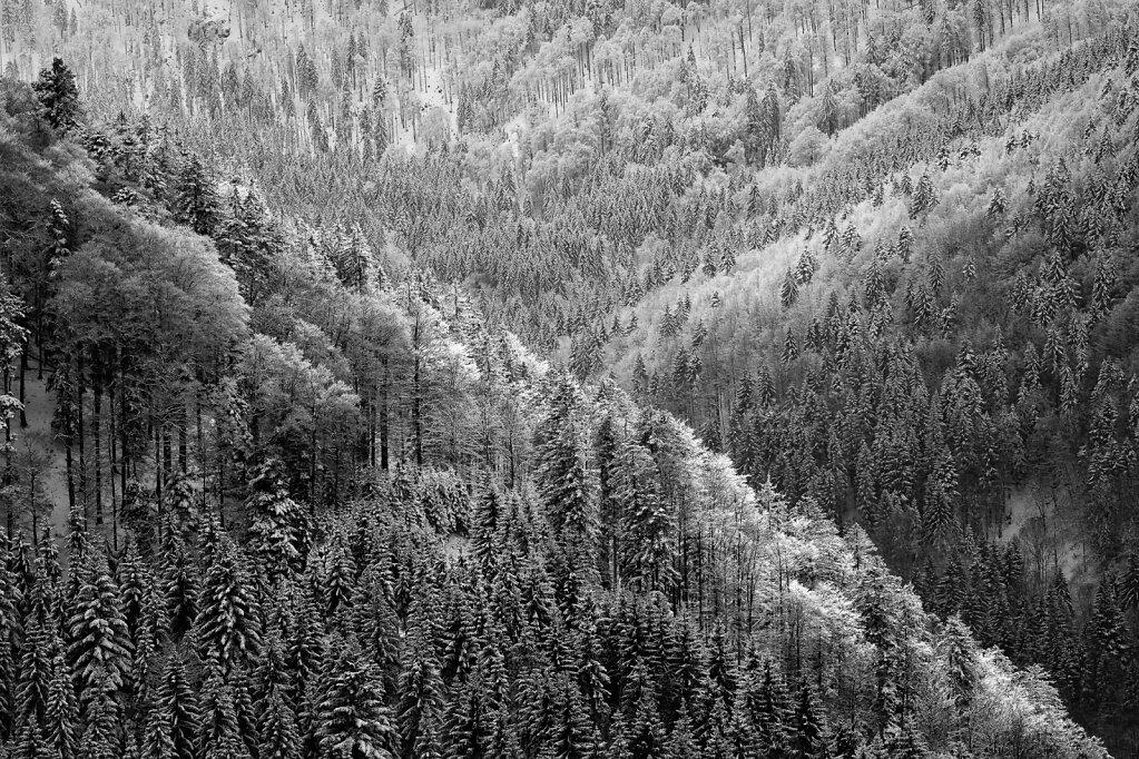 Schwarzwald 38
