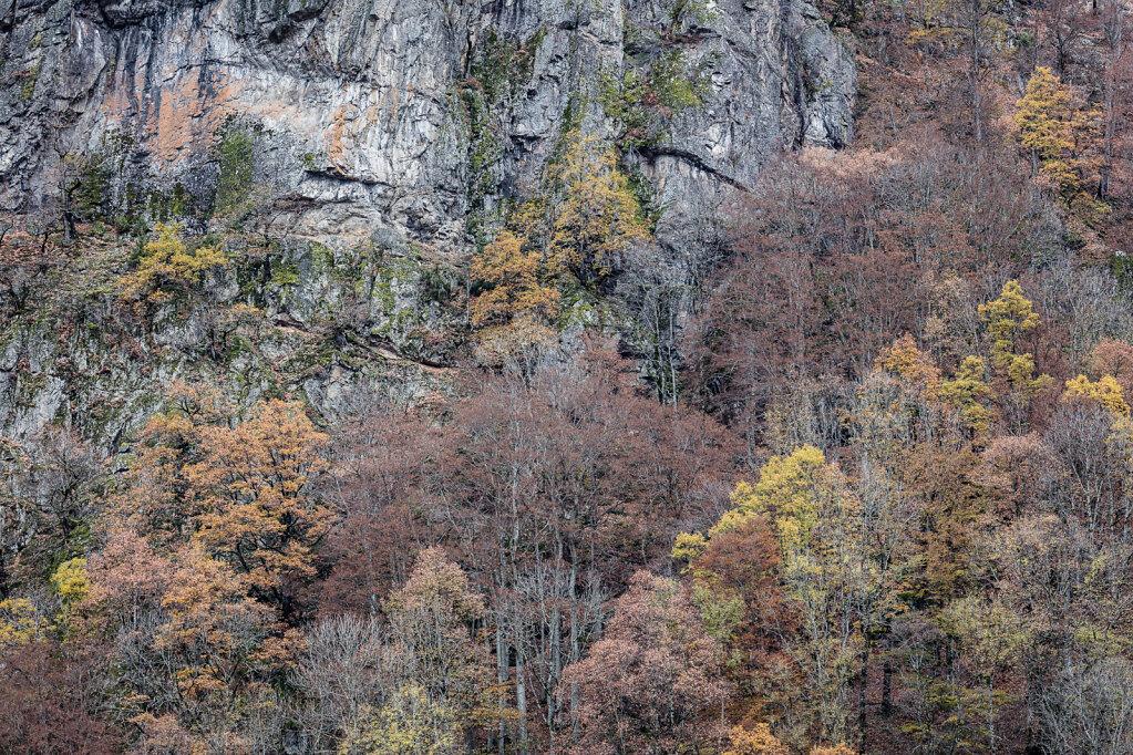 Schwarzwald XIV