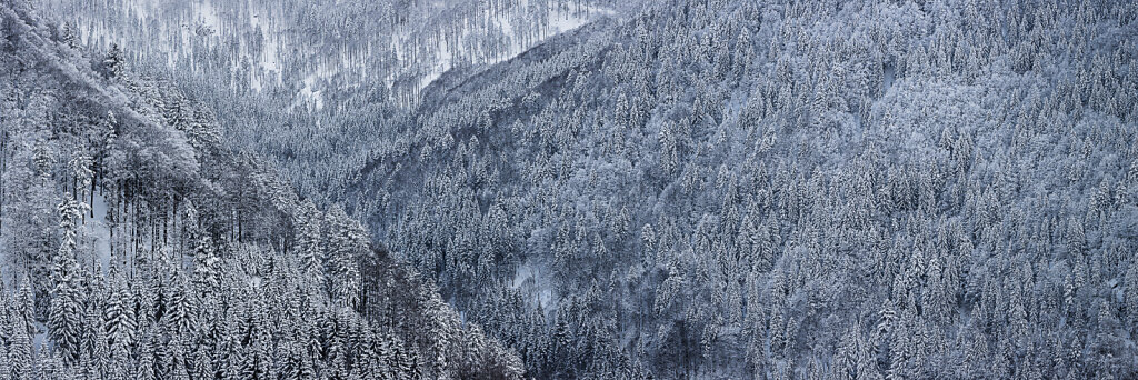 Wald 39