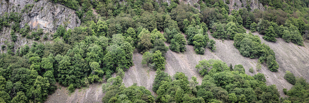 Wald 40