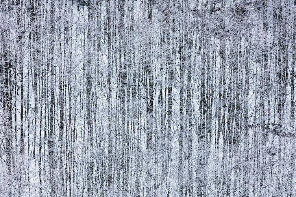 Wald XLVI