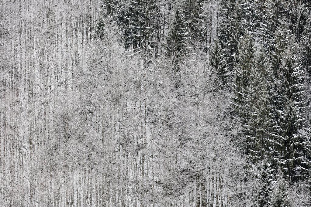 Wald XLVII