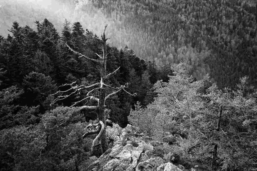 Schwarzwald 60