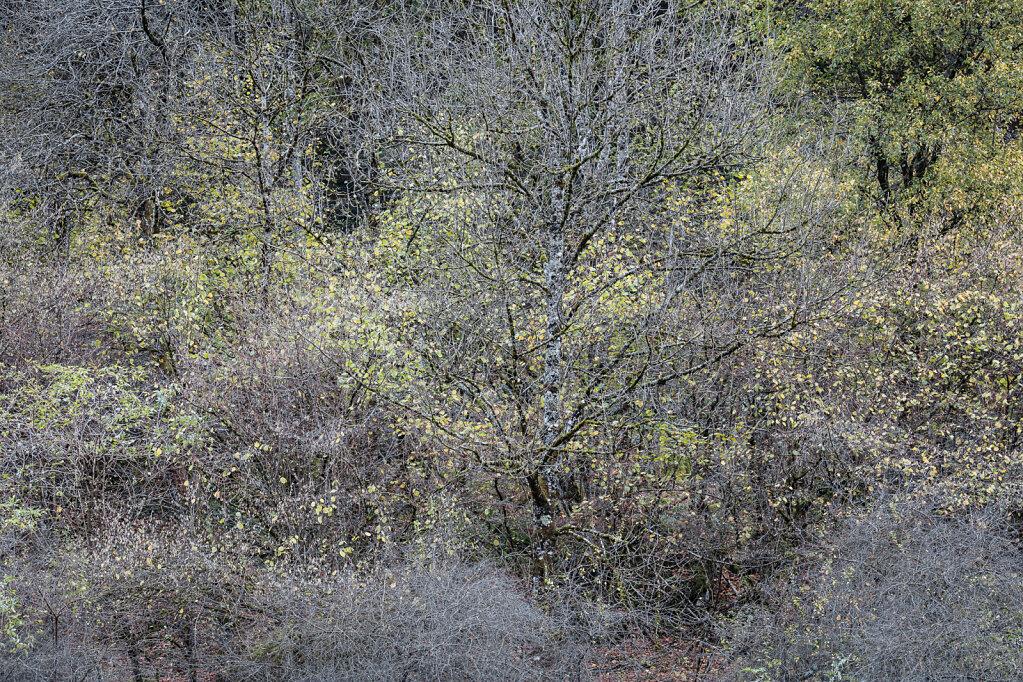 Wald LVI