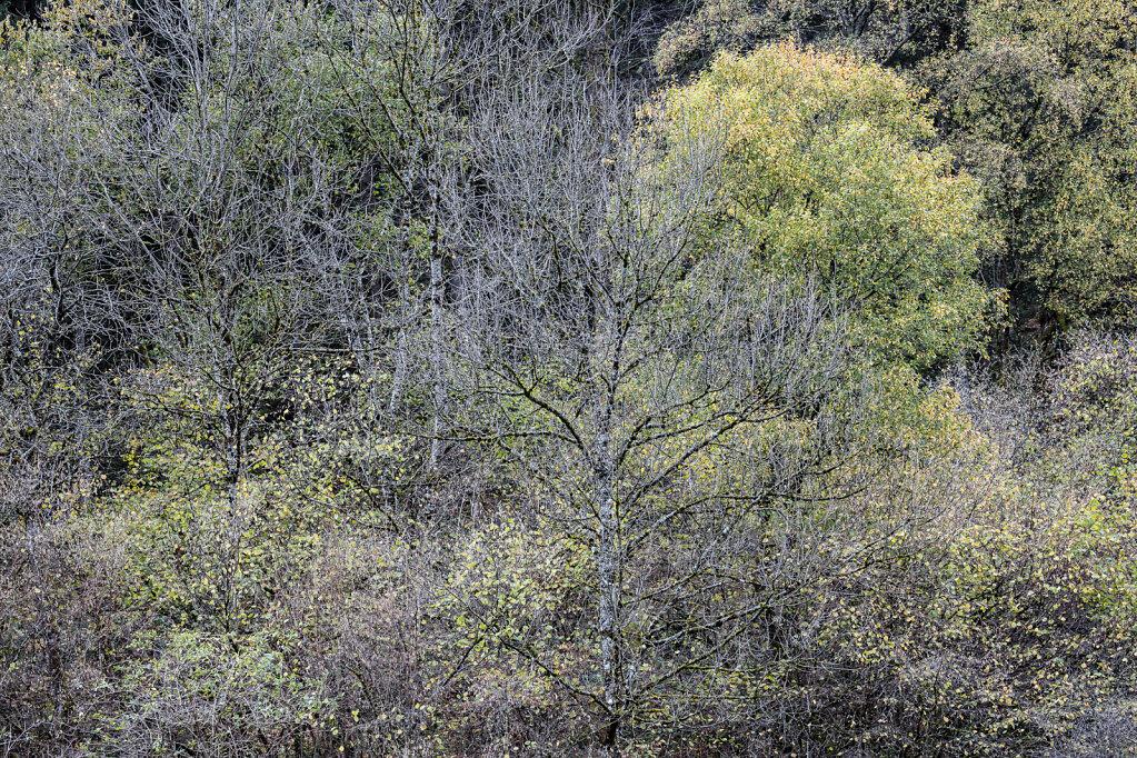 Wald LV