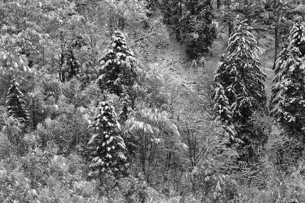 Schwarzwald 56