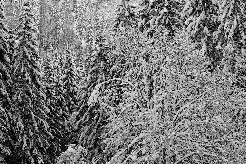 Schwarzwald 52