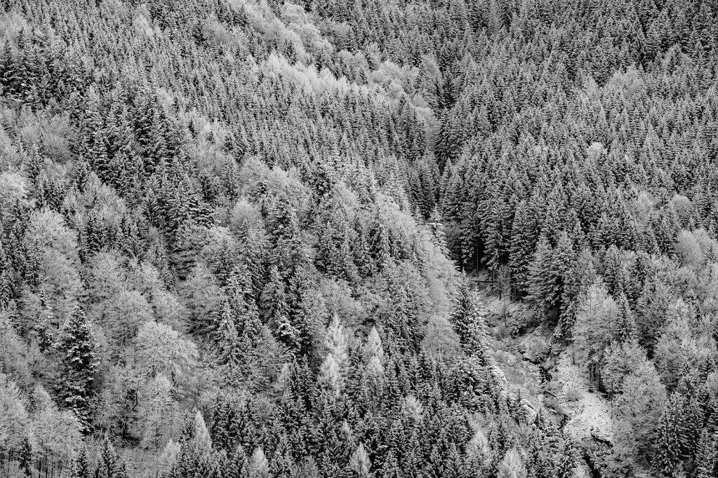 Schwarzwald 64