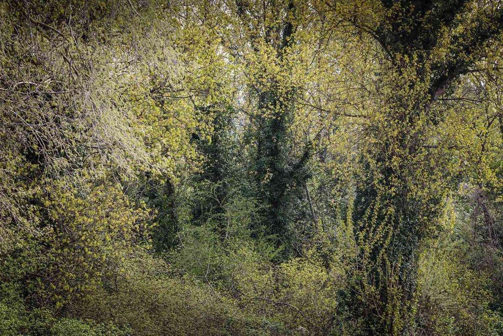 Rheinwald 5