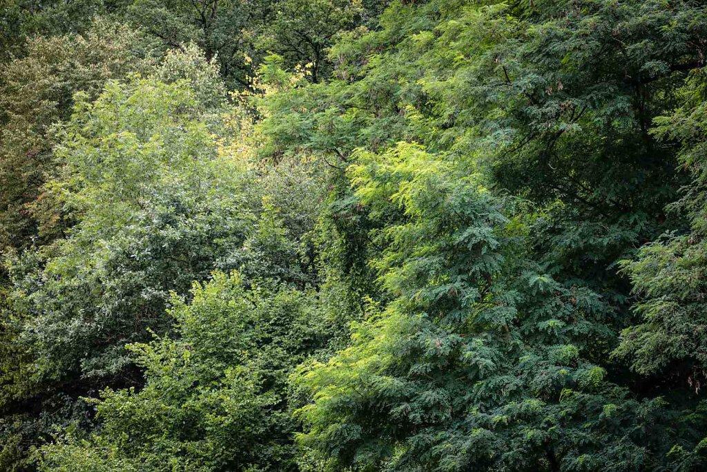Wald LVIII