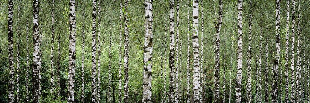 Wald 46