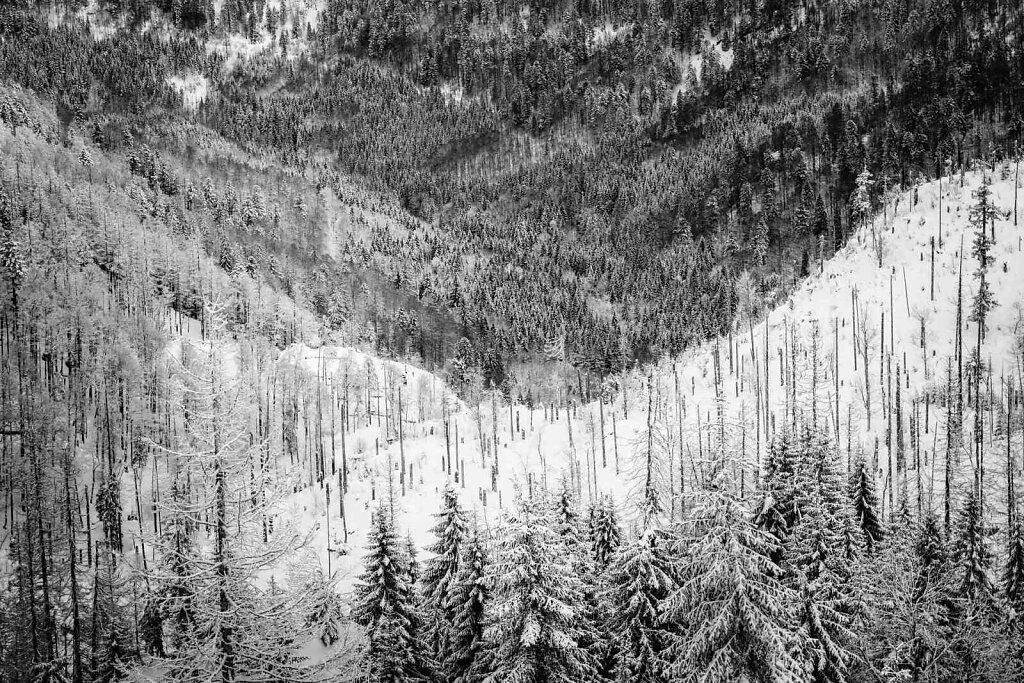 Schwarzwald 85